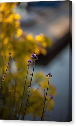Delicate Bursts Of Purple Canvas Print by Mike Reid