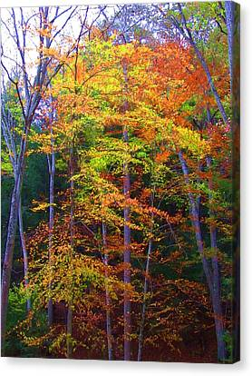 Delicate Colors Canvas Print by Vijay Sharon Govender