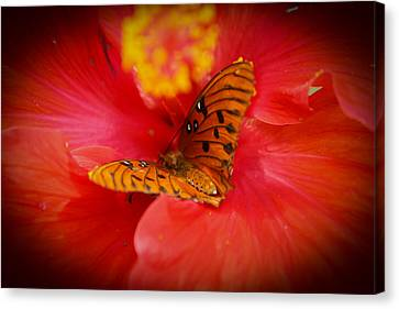 Delicate Visitor Canvas Print by Theresa Johnson