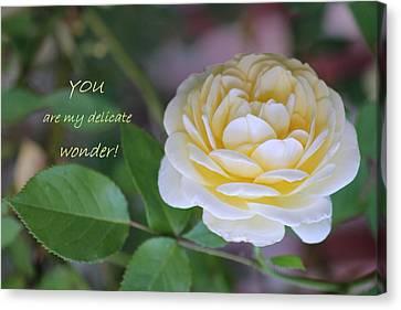 Delicate Wonder Canvas Print by Deborah  Crew-Johnson
