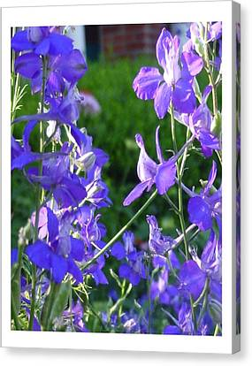 Canvas Print featuring the photograph Delicately Blue by Frank Wickham