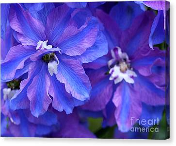 Delightful Delphinia Flowers Canvas Print by Sabrina L Ryan