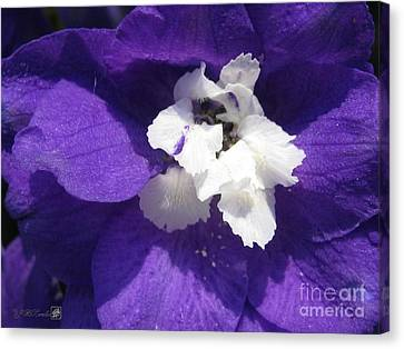 Canvas Print featuring the photograph Delphinium Named Blue With White Bee by J McCombie