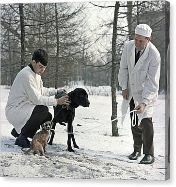 Demikhov's Laboratory Dogs, 1967 Canvas Print by Ria Novosti