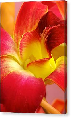 Canvas Print featuring the photograph Dendribium Malone Or Hope Orchid Flower by Perla Copernik