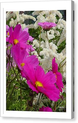 Canvas Print featuring the photograph Descendingly Pink by Frank Wickham