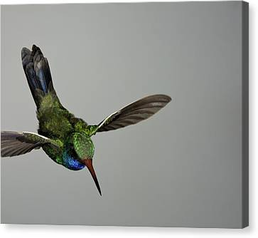 Canvas Print featuring the photograph Descent by Gregory Scott