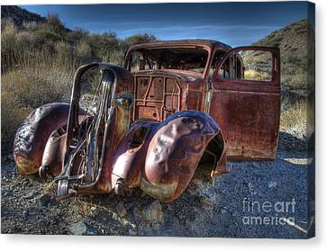 Desert Beauty Canvas Print by Bob Christopher