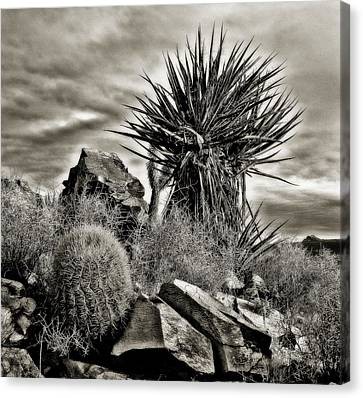 Canvas Print featuring the photograph Desert Garden by Thomas Born