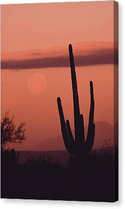 Desert Scene With Full Moon And Saguaro Canvas Print by Ralph Lee Hopkins