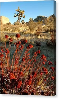 Canvas Print featuring the photograph Desert Surprise by Johanne Peale