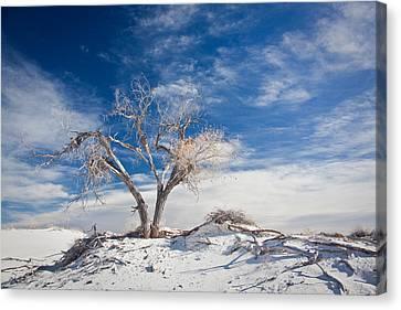 Desert Tree In White Sands Canvas Print by Ralf Kaiser