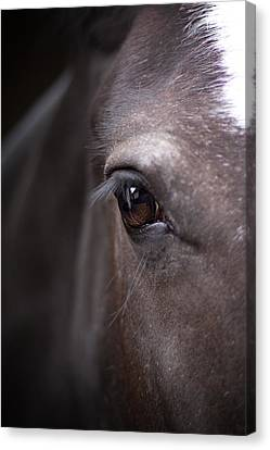 Detailed Close Up Of Black Horse's Eye Canvas Print by Ethiriel  Photography