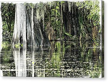 Details Of A Florida River Canvas Print by Janie Johnson