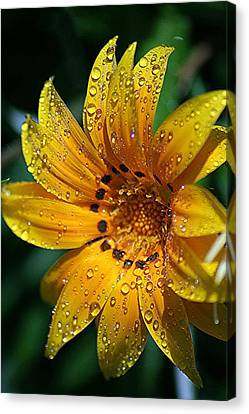 Dew-dipped Wildflower Canvas Print by Louise Mingua