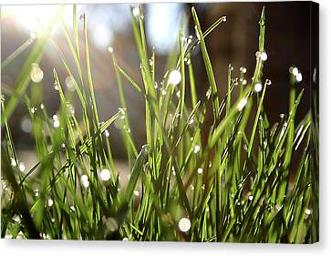 Dew Canvas Print by Emanuel Tanjala
