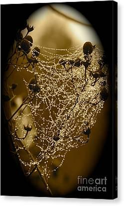 Dressing Room Canvas Print - Dewdrop Cameo by Carol Groenen
