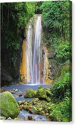 Natural Pool Canvas Print - Diamond Falls- St Lucia by Chester Williams