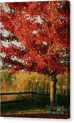 Maple Season Canvas Print - Digital Painting Maple Tree In Full Color by Sandra Cunningham