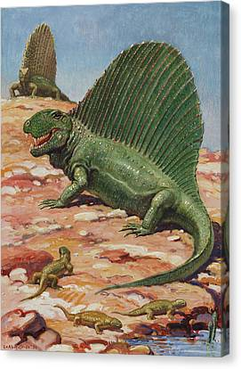 Dimetrodons Spines Could Grow Canvas Print by Charles R. Knight