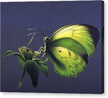 Canvas Print featuring the painting Dina Yellow by Shawn Kawa