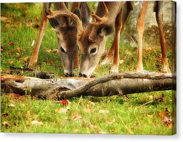 Dining Together Canvas Print by Karol Livote