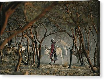Dinka Tribesmen And Their Cattle Escape Canvas Print