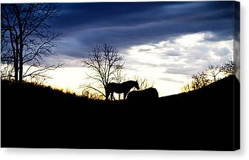 Feeding Canvas Print - Dinner On The Hill by Betsy Knapp