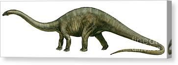 Diplodocus, A Prehistoric Era Dinosaur Canvas Print by Sergey Krasovskiy