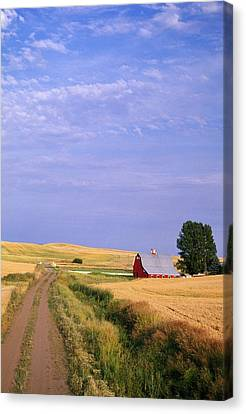 Dirt Road Through Wheat Field Canvas Print by Natural Selection Craig Tuttle