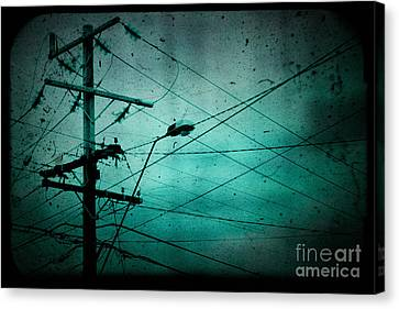 Disconnection Canvas Print by Andrew Paranavitana