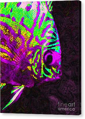 Discus Tropical Fish 2 Canvas Print