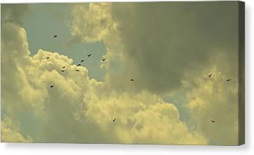Distant Birds Canvas Print by Naomi Berhane