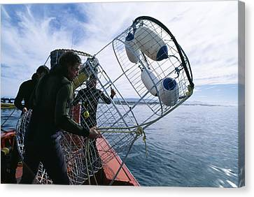 Cage Diving Canvas Print - Divers Preparing A Shark Cage by Alexis Rosenfeld