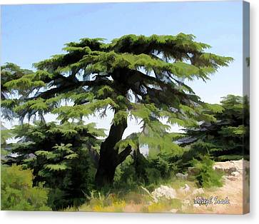 Canvas Print featuring the photograph Do-00511 Cedar Forest by Digital Oil