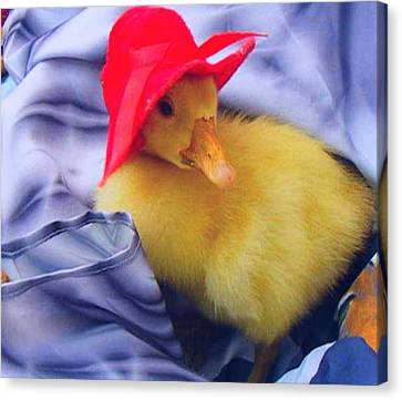 Canvas Print featuring the painting Dodo With Red Hat by Bogdan Floridana Oana