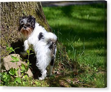 Dog And Tree Canvas Print