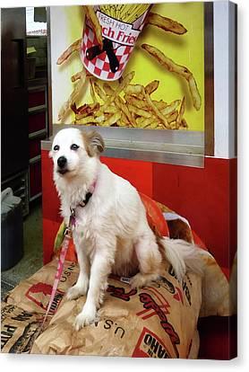 Dog At Carnival Canvas Print by Susan Savad