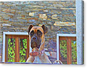 Canvas Print - Dog Buldog by Jenny Senra Pampin