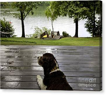 Dog Day Afternoon Canvas Print by Madeline Ellis