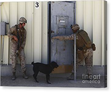 Working Dog Canvas Print - Dog Handlers Conduct Improvised by Stocktrek Images