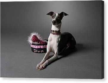 Dog In Sitting Position With Diva Bowl Canvas Print by Chris Amaral