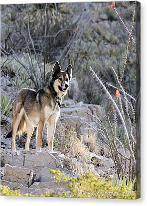 Dog In The Mountains Canvas Print by Marlo Horne