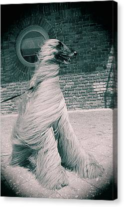 Dog In The Wind.  Canvas Print by Giancarlo Sherman