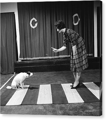 Crosswalk Canvas Print - Dog On A Zebra by John Drysdale