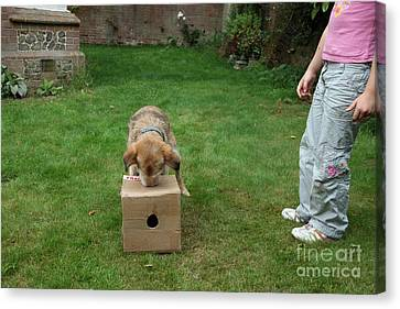 Dog Playing Canvas Print by Mark Taylor