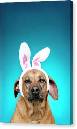Dog Portrait Wearing Easter Bunny Ears Canvas Print by Jade Brookbank