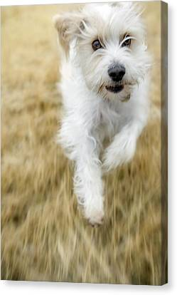 Dog Running Canvas Print