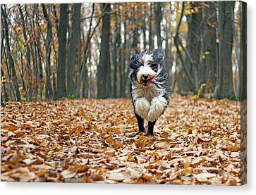 Dog Running In Forest Canvas Print by Regarder tout autour de soi