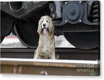 Dog Under A Train Wagon Canvas Print by Mats Silvan